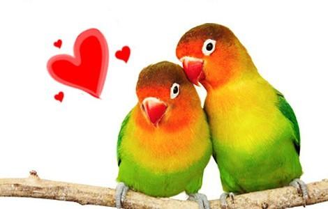 lovebirds-470x300new